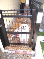 愛犬が自由に行き来できるように家の両脇にはフェンスを取り付けた(庭)