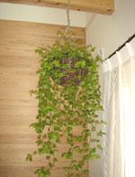 ▲驚くほどぐんぐん育つグリーンは、エネージュのきれいな空気だからこそ。