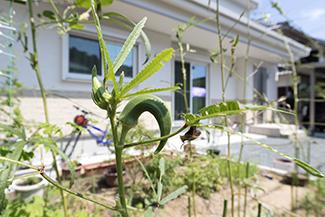 兵庫県高砂市:建て替え/庭